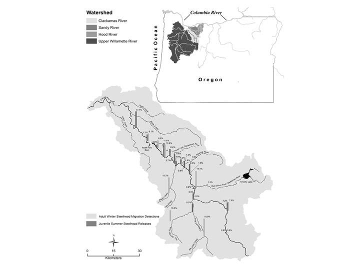 Clackamas River steelhead hatchery analysis